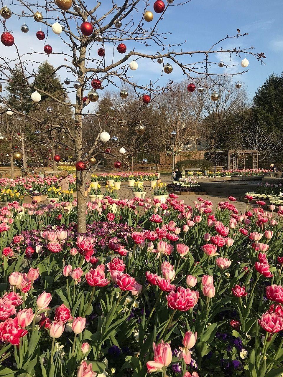 メルヘンの丘には色とりどりのお花が咲いています。