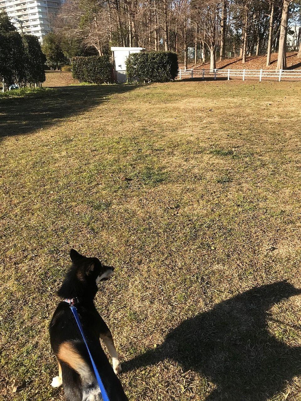 愛犬はっぱと流山総合運動公園へ散歩に行きました。