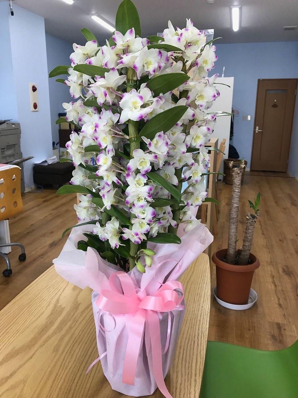 流山セントラルパーク駅前のかとうや3周年のお祝いにお花を頂戴しました。