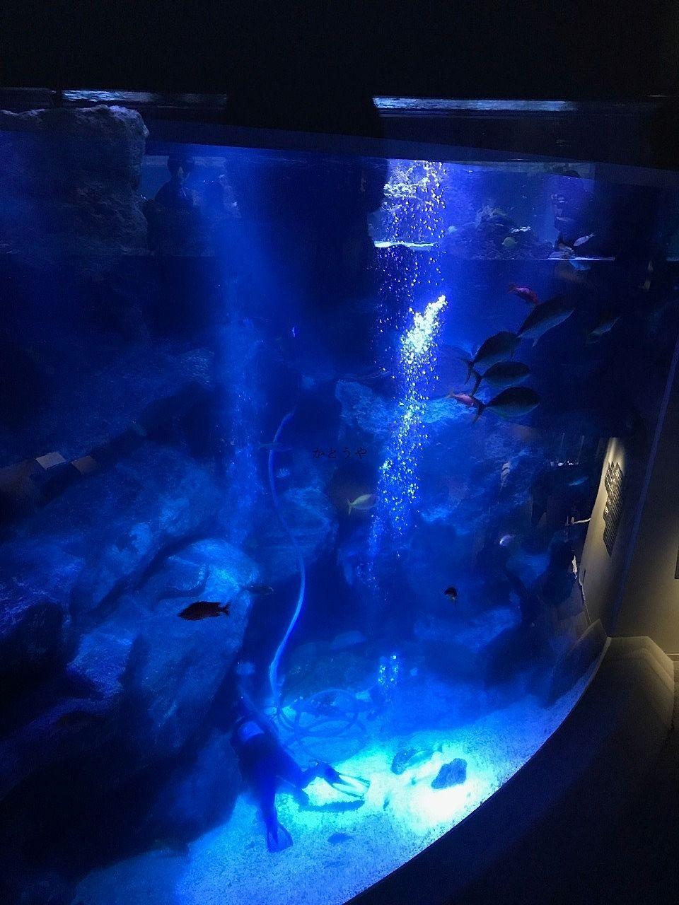 子どもたちに人気の東京スカイツリー、ソラマチのすみだ水族館です。