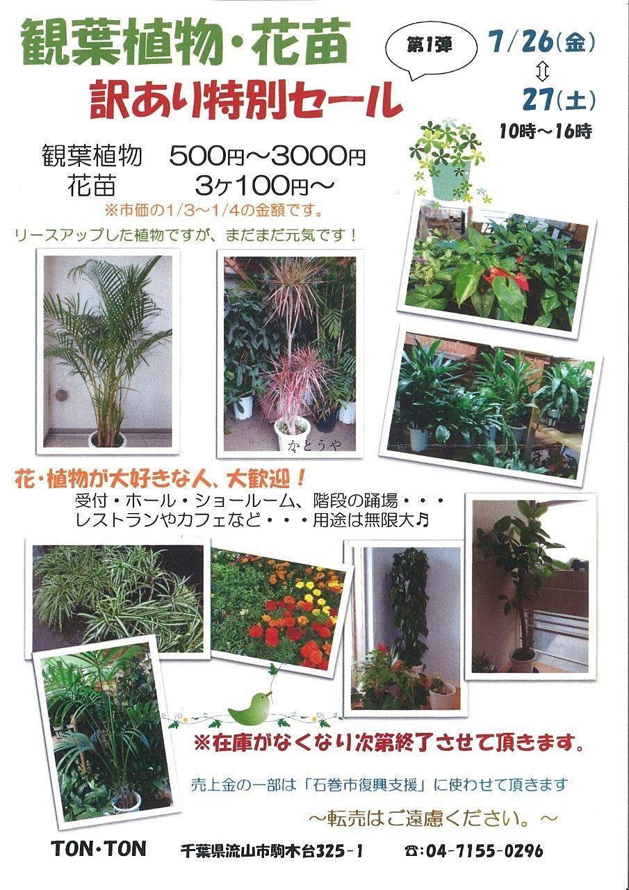 観葉植物好きな方必見!観葉植物・花苗訳あり特別セール