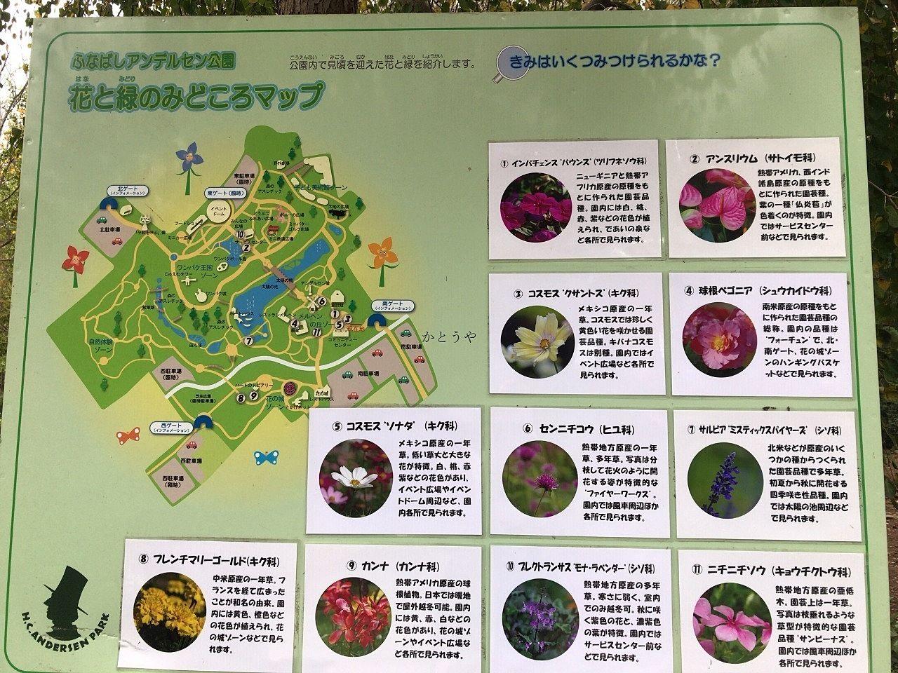 10月中旬のふなばしアンデルセン公園 お花情報です