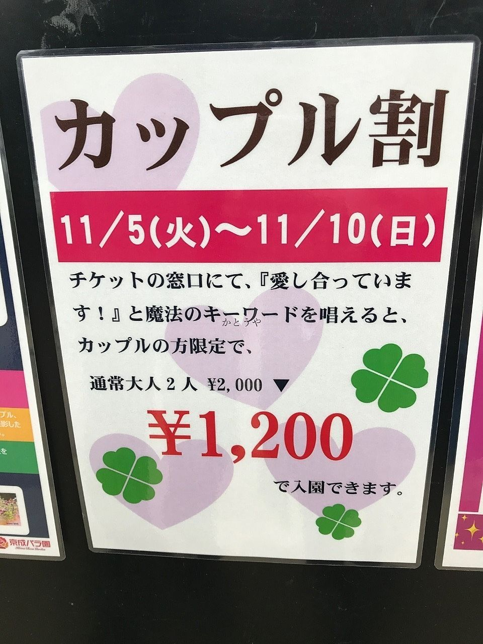 こんにちは、かとうや藤原です。お休みの日に京成バラ園へ行って参りました!秋バラただ今見ごろです!
