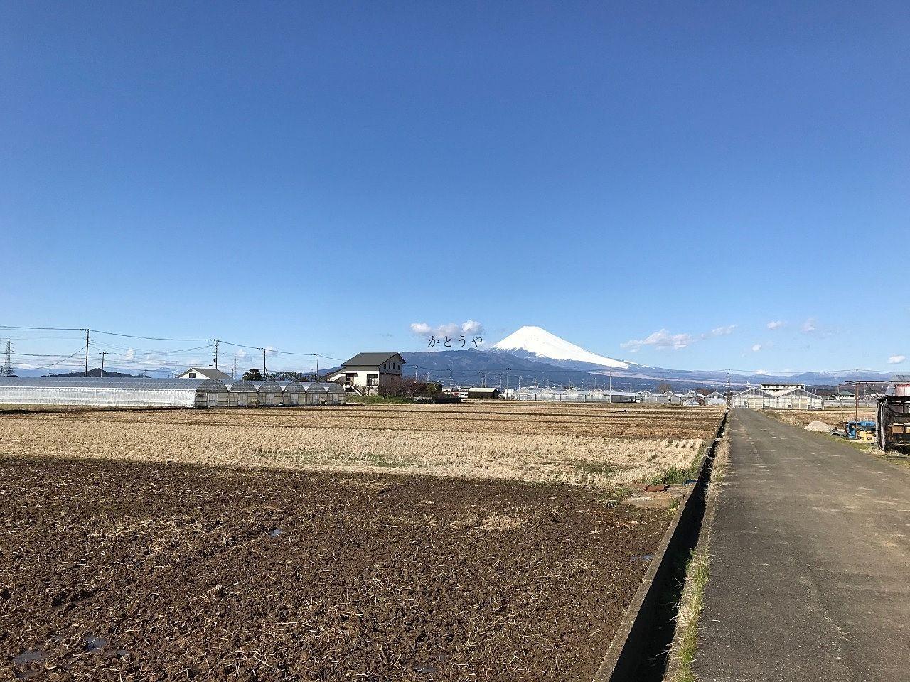 いちご狩りスポットの秋田農園さんからは綺麗に富士山が見えます。