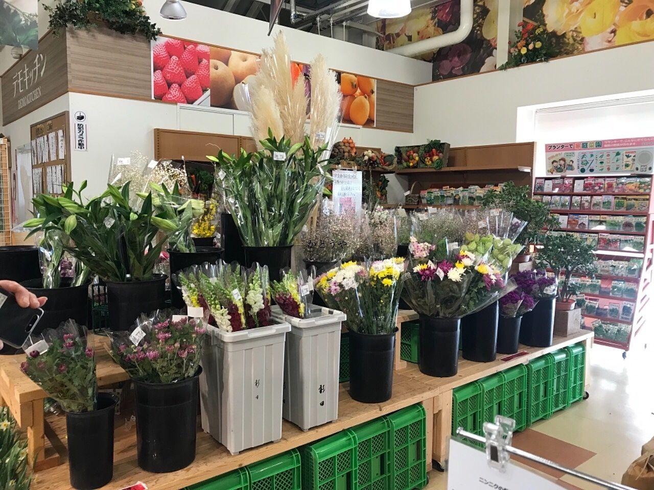 南房総はお花も有名です。