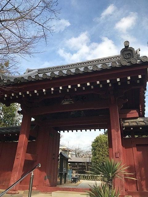 目つぶしの鴨と東福寺さん